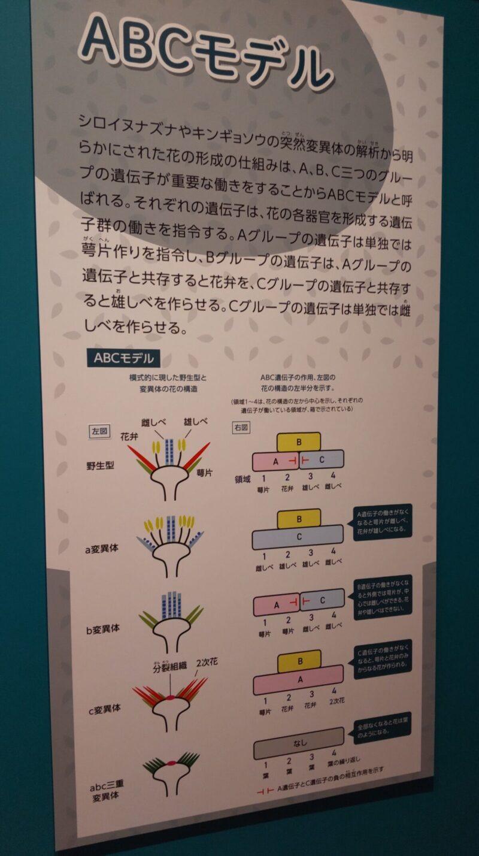 ABCモデルの説明